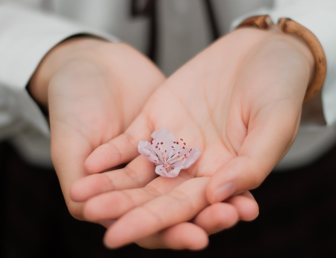 blur-close-up-flower-460295